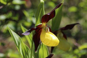 Les lémuriens et les orchidées pourraient bientôt disparaître