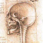 Léonard de Vinci: on a retrouvé un de ses crânes en Allemagne