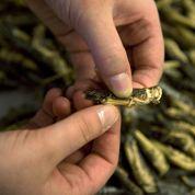 Troisrecettes pour nourrir 9,5 milliards de Terriens