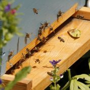 Le président Obama veut sauver les abeilles