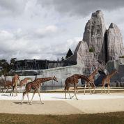 Succès pour la réouverture du zoo de Vincennes