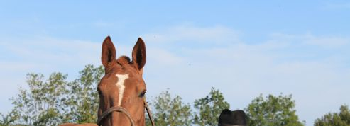 Mont-Saint-Michel: Veolia condamné à verser 1,1 million d'euros à un éleveur de chevaux