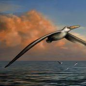 Les qualités aériennes du plus grand oiseau volant