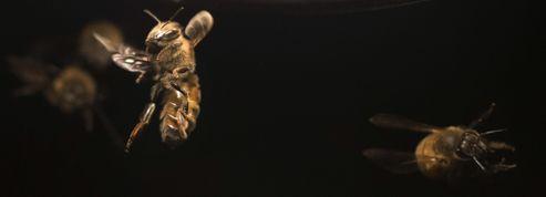 Les abeilles, ouvrières zélées