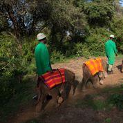 Au Kenya, un orphelinat pas comme les autres