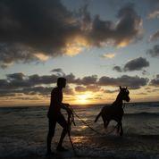 Algues vertes : l'État reconnu coupable de la mort d'un cheval