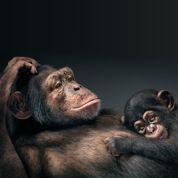 Tant qu'il y aura des singes…