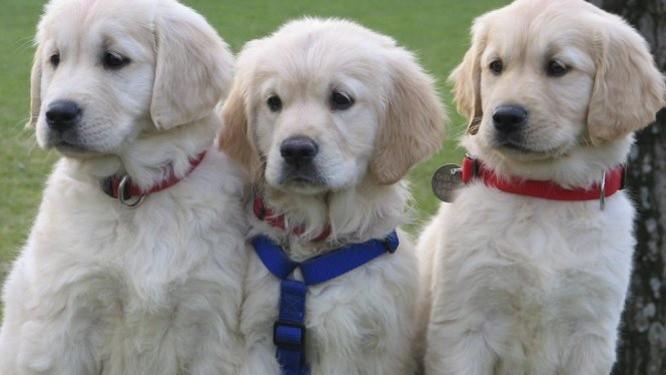 46% des Français préféreraient partir avec leur chien plutôt qu'avec leur conjoint en vacances
