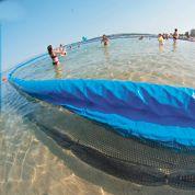 Les méduses semblent vouloir s'installer en Méditerranée