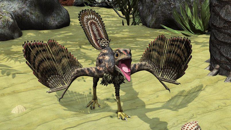 Comment des dinosaures sont devenus des oiseaux