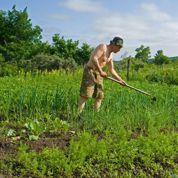 Jardin : profitez du retour du soleil pour désherber