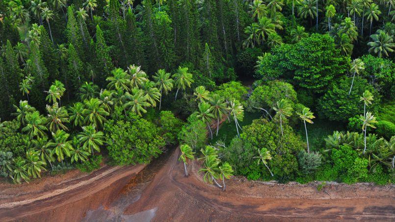 forêt ou végétation des littoraux tropicaux
