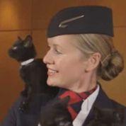 British Airways lance une chaîne télé de chats pour détendre les passagers
