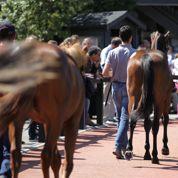 Les ventes de yearlings à Deauville ne connaissent pas la crise