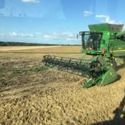 La France obligée d'importer du blé meunier