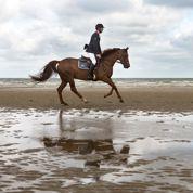 La Normandie, bastion du cheval de compétition