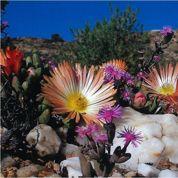 Plantes «grasses»: participez au concours photo de la SNHF