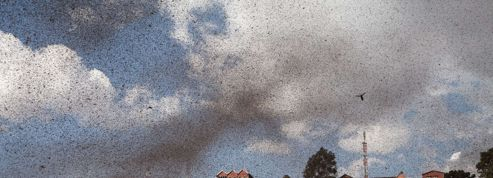 Les criquets envahissent Madagascar