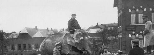 Chiens, éléphants, chameaux : ces animaux embrigadés dans la Première Guerre mondiale