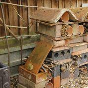 Hôtel à insectes : peut-on utiliser du bois résineux ?