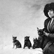 Les Poilus et les bêtes, Colette (1916)