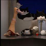 Top 10... des chats à la télévision