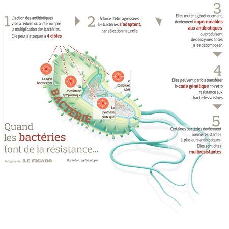 Maladies bactériennes: quel avenir pour les antibiotiques?