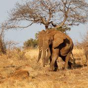 La moitié des animaux sauvages a disparu en moins d'un demi-siècle