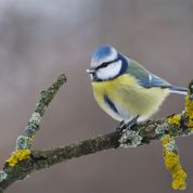 Des nichoirs pour redonner droit de cité aux oiseaux