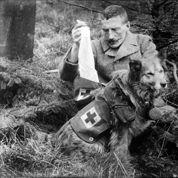 Pendant la guerre, les animaux à l'honneur