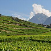 La viticulture continue d'attirer les Français