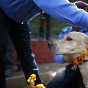 Le Népal rend hommage à ses chiens policiers
