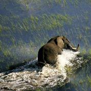 L'aventure sur les routes du Botswana