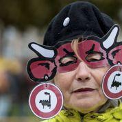 Ferme des «1000 vaches» : des amendes et jusqu'à 5 mois avec sursis