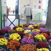 Le chrysanthème reste la star de la Toussaint