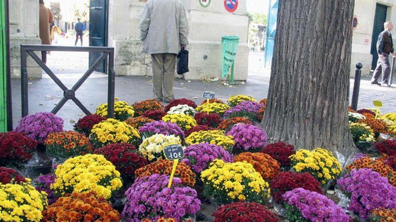 Le chrysantème reste la star de la Toussaint - Le Figaro