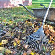 Jardin : vos feuilles mortes valent de l'or