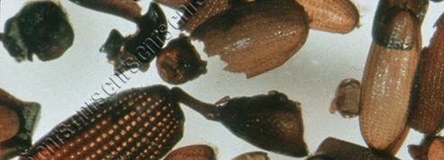 Des scientifiques reconstituent la faune et la flore du Marseille d'il y a cinq siècles