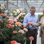 Création de nouvelles roses : Delbard livre ses secrets