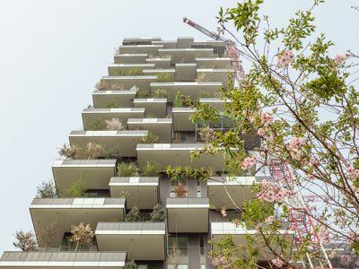 Floraison des <i>prunus</i> au printemps 2014. Crédit photo: Delfino Sisto Legnani.
