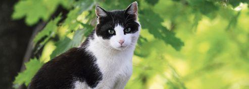 Comment les chats sauvages sont devenus de jolis minous