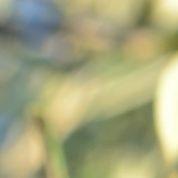 Les olives nuisent-elles à la qualité des sols?