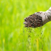 Comment équilibrerun sol trop riche en phosphore ?