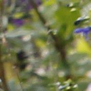 Le Figaro s'enracine dans l'univers du jardin