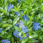 Quelles alternatives au gazon dans un petit jardin?