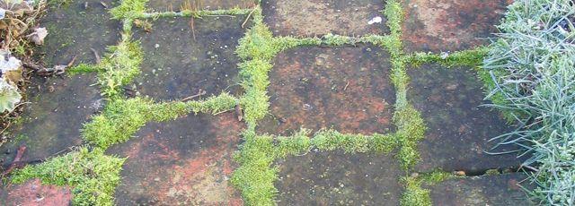 démoussage naturel d une pelouse