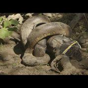 Eaten Alive : Paul Rosolie s'est (presque) fait avaler vivant par un anaconda
