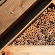 Où trouver du bois non traité pour faire un hôtel à insectes?