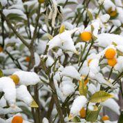 Préparez vos plantes à affronter le froid et l'humidité
