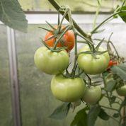 Quels légumes cultiver l'hiver dans une serre ?